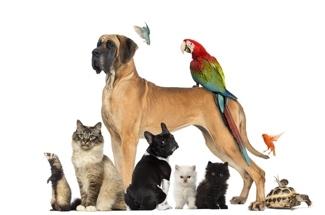 Garde d'animaux entre voisins